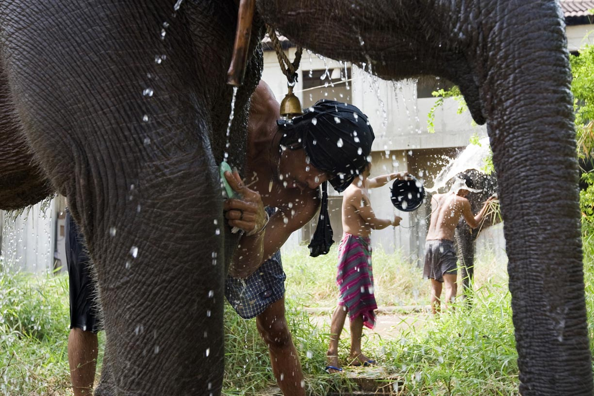 Mahouts wash elephants at an abandoned housing development in Bang Bua Thong, Thailand.