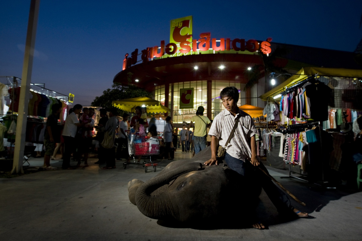A mahout and his elephant stand in front of a shopping centre in Bangkok.