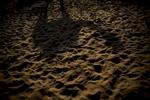 A camel's shadow is cast on the desert sand in Pushkar.