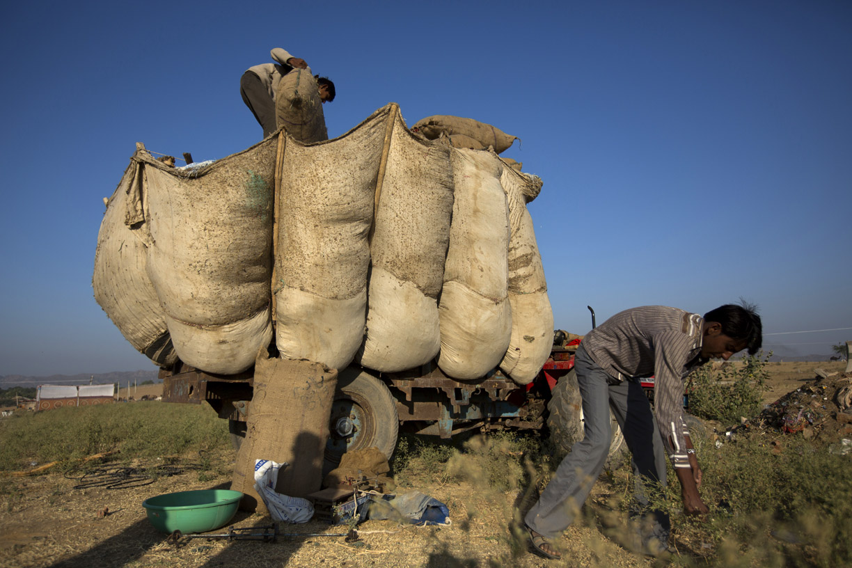 Camel traders prepare to set up camp in Pushkar.