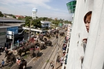 Elephants gather on a street in Surin during a parade.