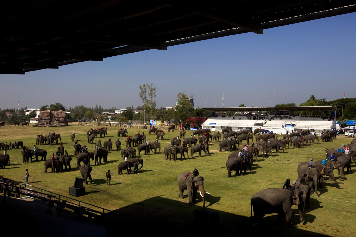 Mahouts ride elephants through a stadium at the Surin Elephant Roundup.