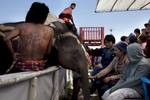 An elephant greets an audience during the Surin Elephant Roundup.