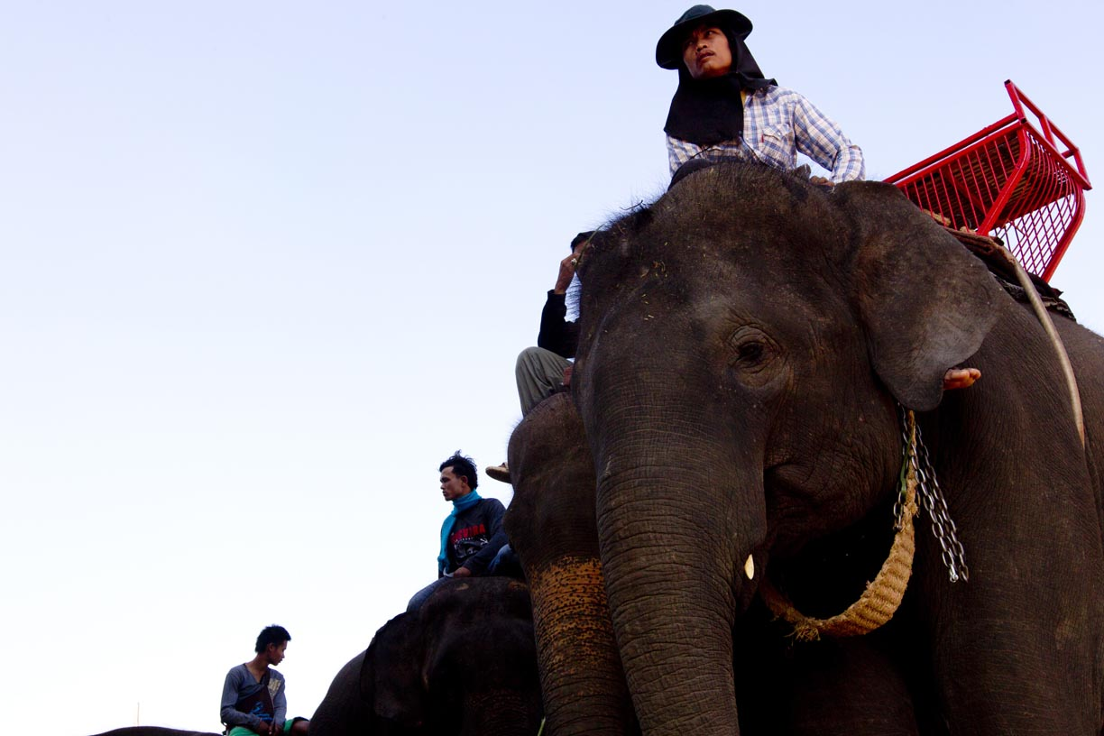 Mahouts sit on elephants during the Surin Elephant Roundup.