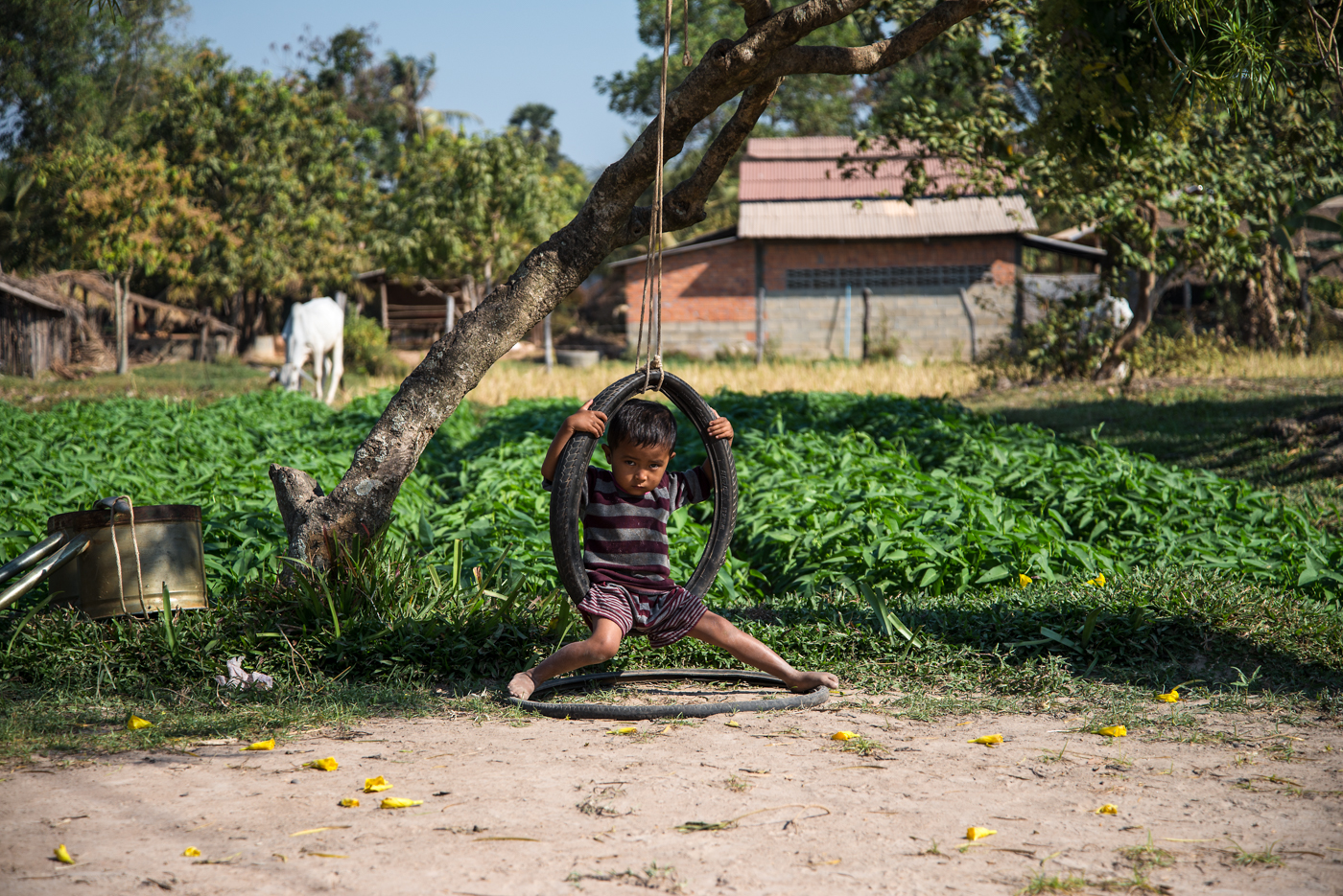 A young boy hangs on a tire swing in the rural Cambodian countryside.
