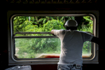A man stares off into the palms from the Hershey train.