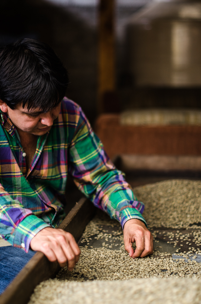 This man sorts beans before he roasts them to serve at his café in the Guatemalan highlands.
