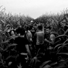 august 11, 2015. a group of families and friends from syria hide in a field of corn meters away from serbia's border with hungary, horgos, serbia.