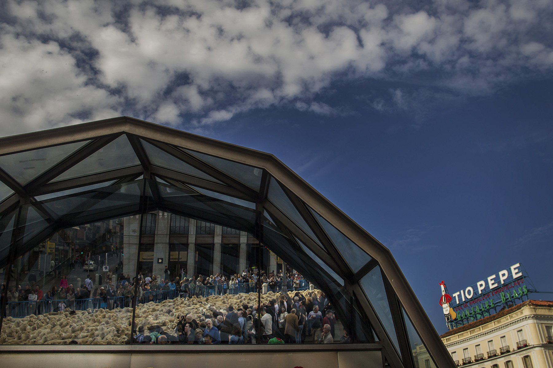 FOTOCAM 2015Fiesta de la Trashumancia.Desde la madrileña Casa de Campo han partido dos mil cabezas de ganado a primera hora de la mañana para llegar, sobre las 10.30 horas, a la Plaza de la Villa, donde, como marca la tradición, autoridades y pastores han renovado la simbólica firma de la Concordia, un documento del año 1418 que permite el paso de las ovejas por las Cañadas Reales de la Villa de Madrid. © Alberto R. Roldan / La Razon02.11.2014