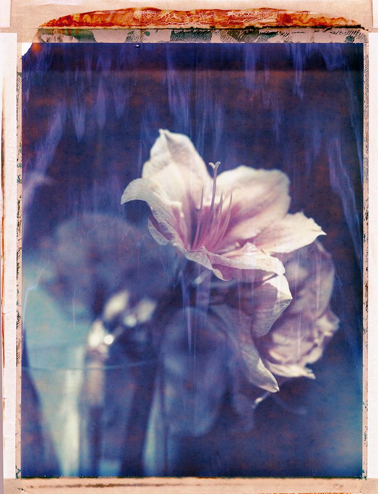 Flower_Pola_8x10C_2_012_NeonWeb_2