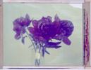 Flowers_July_2017_8x10_012