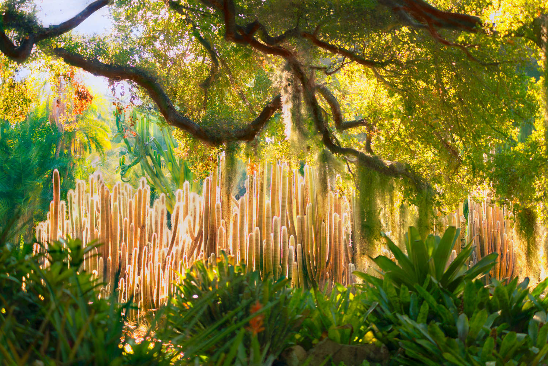 Lotusland - Montecito
