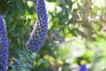 Anna-s-Hummingbird-2