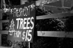 web_christmas_trees_006