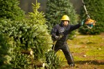 web_christmas_trees_011