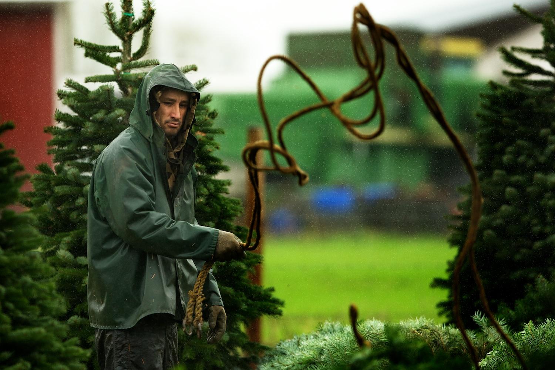 web_christmas_trees_013