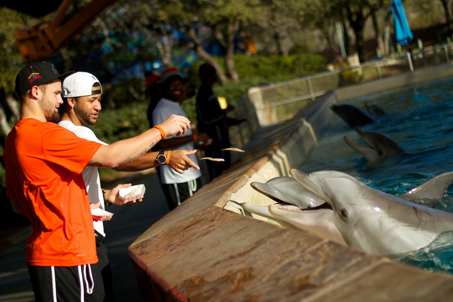 Oregon Sate players hang out at SeaWorld for the moring while in San Antonio, Texas. This was one of the pro-bowl activities for the teams leading up the the Alamo Bowl.