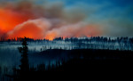 web_forest_fire_001