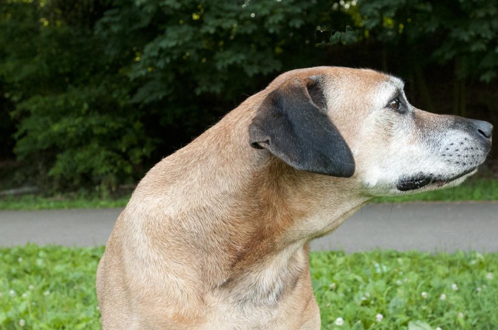 Dog-Prtrait