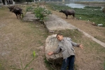 Boy and Cattle near Tam Coc