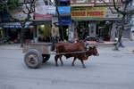 Farmer in Center of Ninh Binh Town