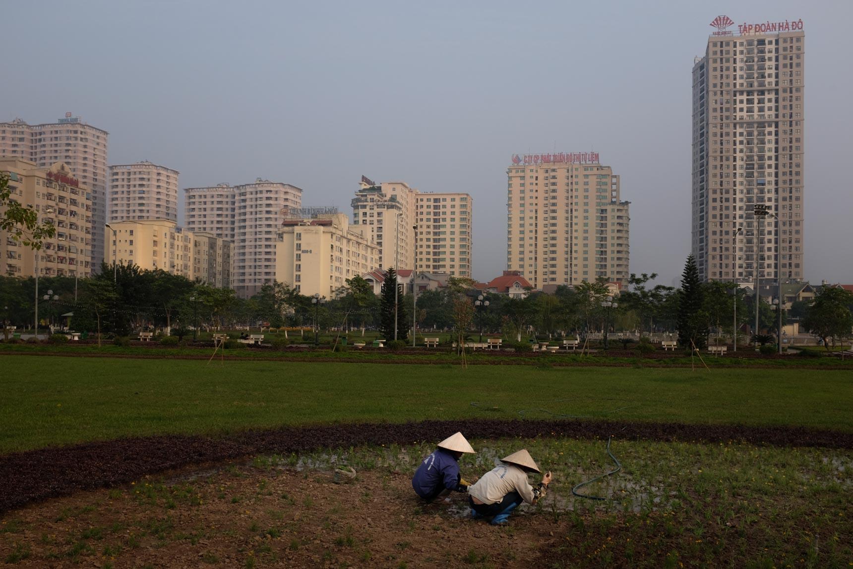 Gardeners, Cầu Giấy Park