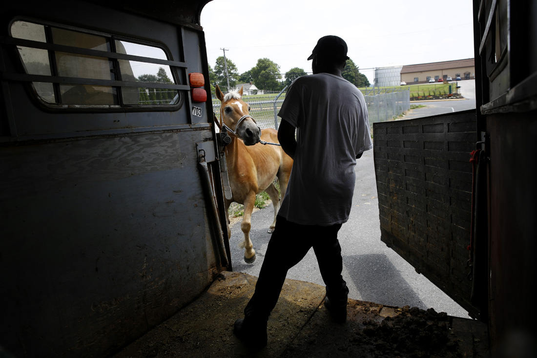 James Rich, a member of a Baltimore arabber stable, coaxes a horse into a trailer in New Holland, Pa., after it received a new set of horseshoes. It's an obscure cross-cultural bond: a tight community of African-American horsemen in disenfranchised West Baltimore and tradition-bound Old Order Mennonites who shun most modern conveniences. But their worlds come together via a dependence on horses and a determination to live proudly on the margins of modern-day society.