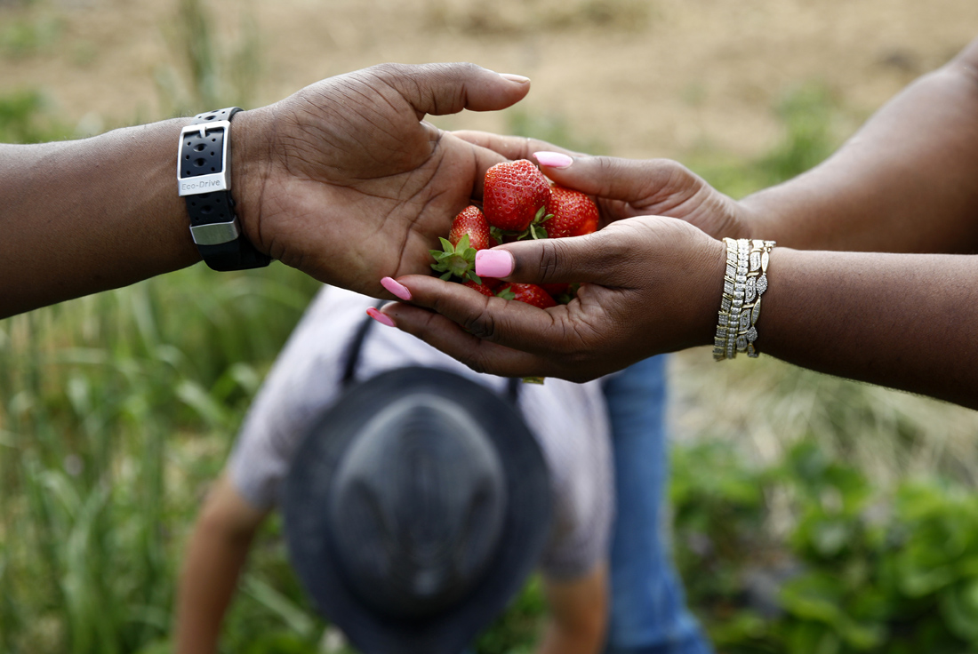 James Chase, left, hands fresh strawberries to his wife Shawnta while visiting an Old Order Mennonite family's farm in New Holland, Pa.