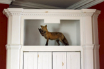 A stuffed fox stands on display inside the Elkridge-Harford Hunt Club clubhouse in Monkton, Md.