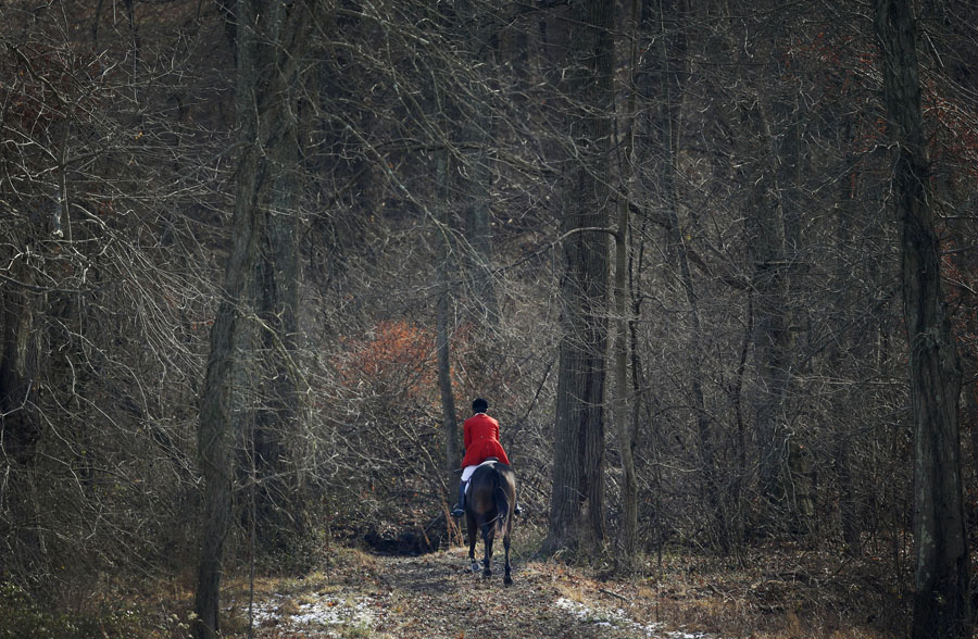 A member of the Elkridge-Harford Hunt Club rides a horse through a stand of trees during a fox hunt.