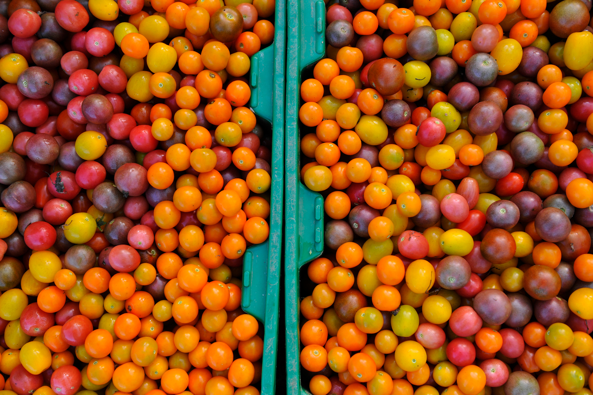 Freshly picked cherry tomatoes at Woodland Gardens Organic Farm in Winterville, Ga., Friday, Sept. 20, 2013. (AJ Reynolds/The Athens Banner-Herald)