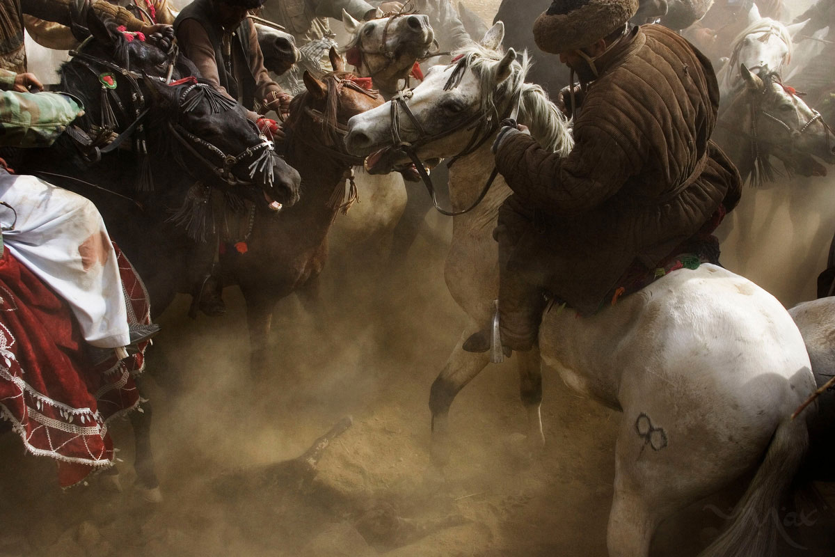 With the sound of screaming horses and whips, horsemen try to reach down from their horses to pick up the carcass of a dead calf on Friday, October 26, 2007.