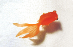 Fish_Web