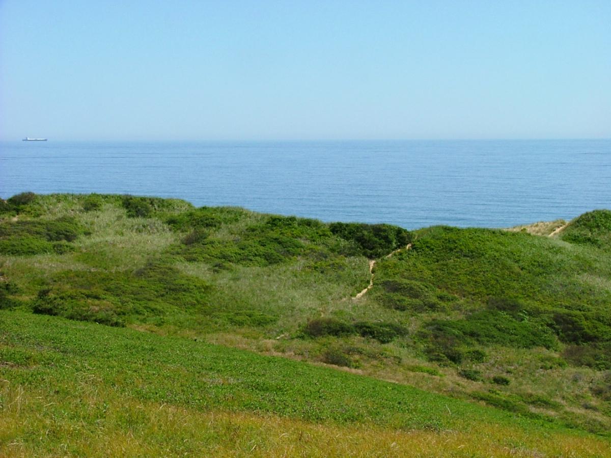 Truro landscape