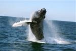 janice_whale