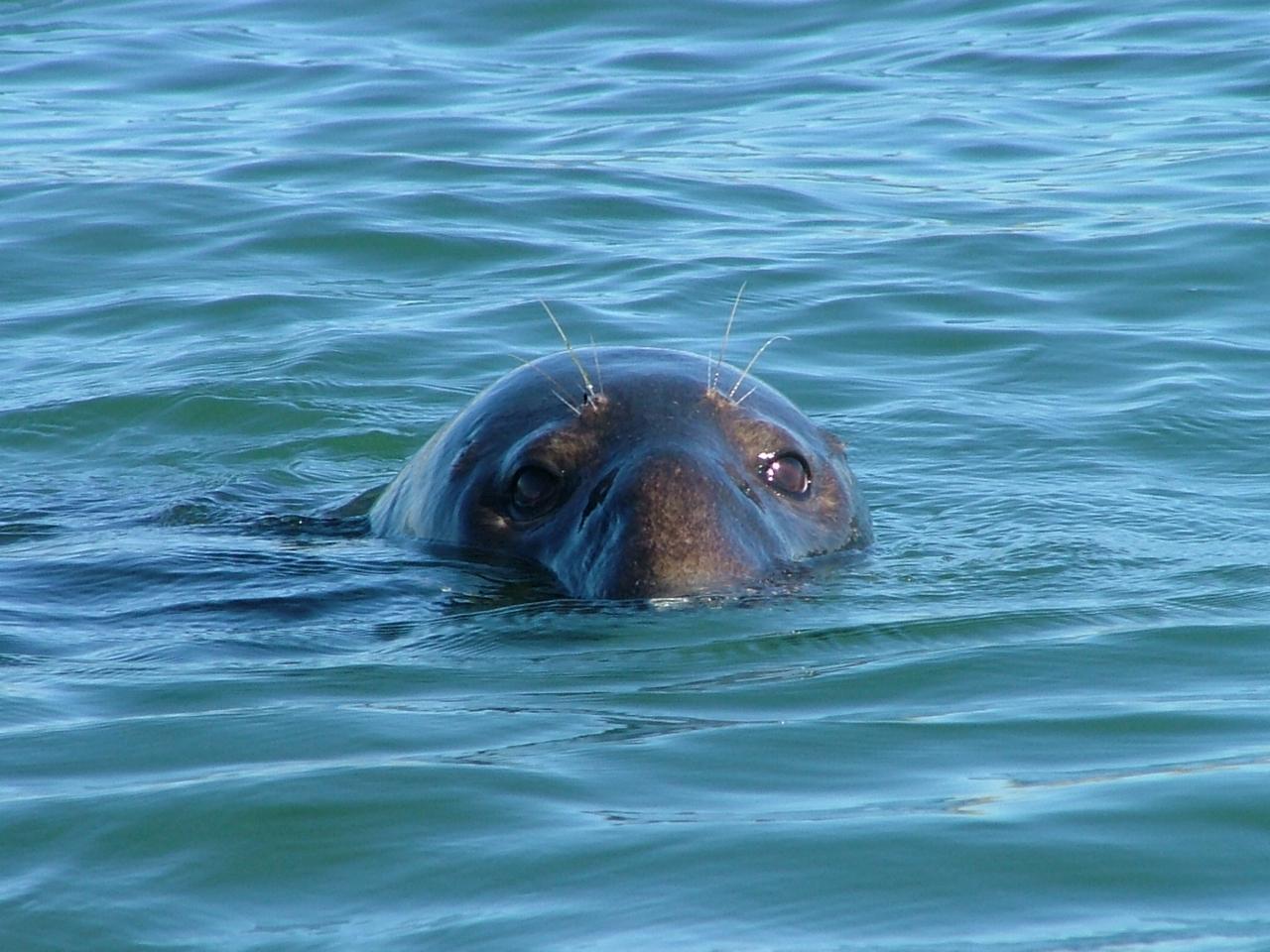 seal_face