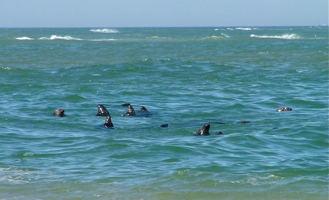 seals__group_shot