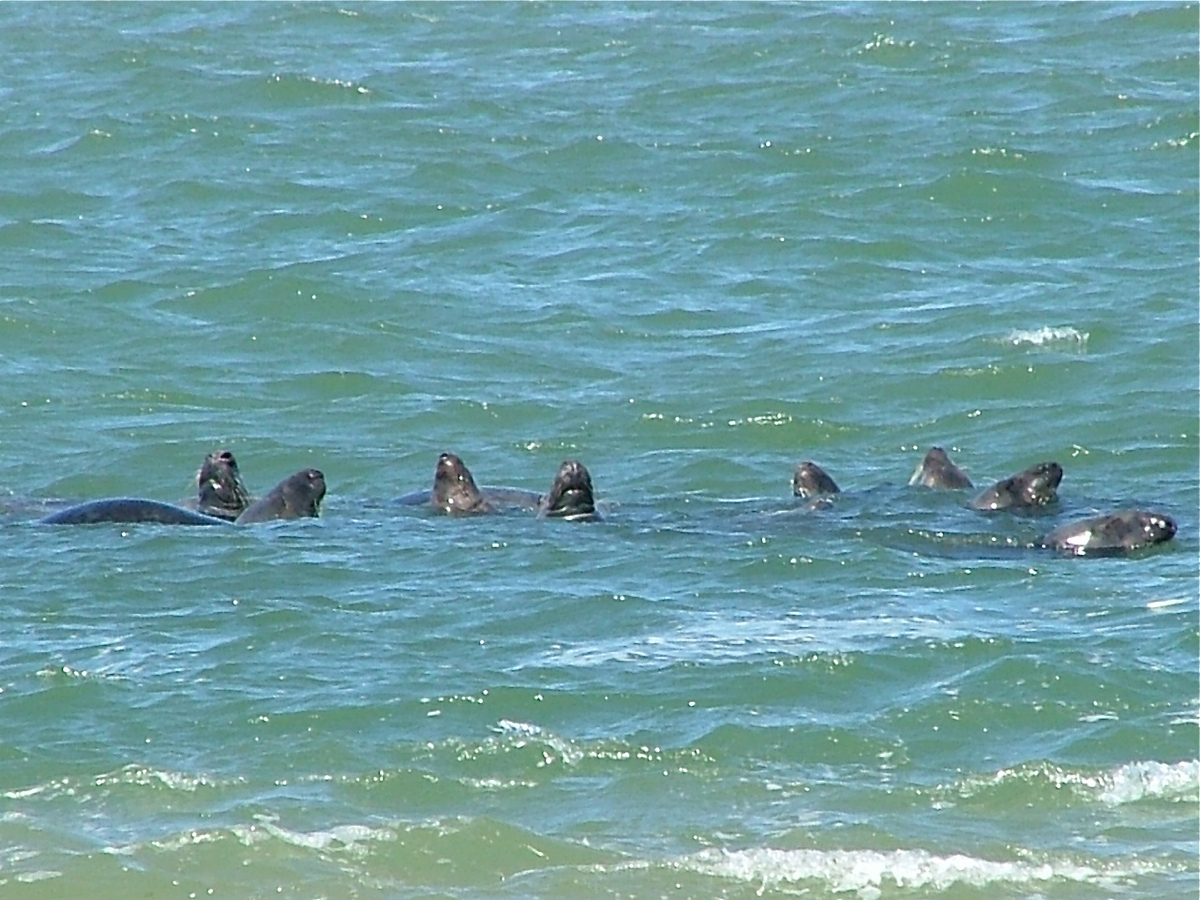 seals__group_shot_4