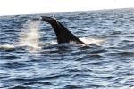 whale15