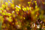 Abstract_Moss_3