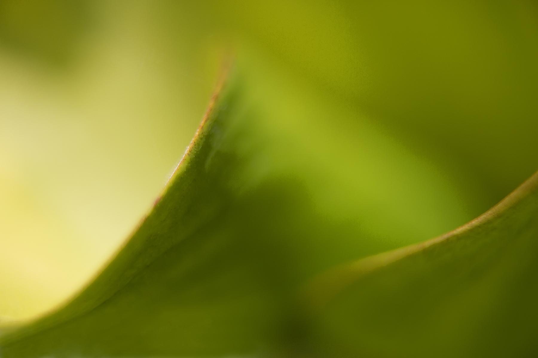 GreenLeaves_3