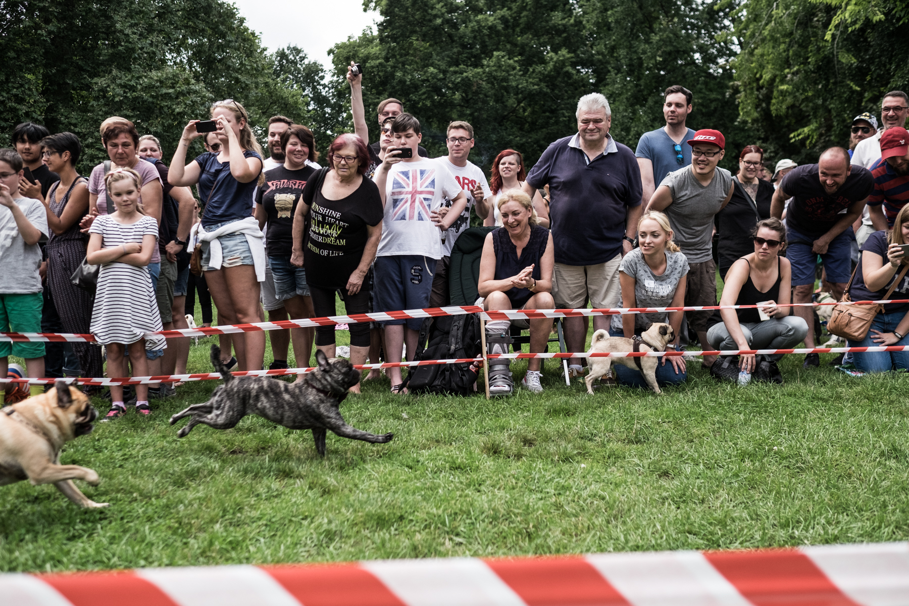 People at a pug race in Offenbach