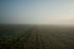 Morning fog on a field in Neu-Anspach in Germany