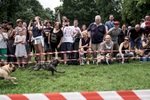 People are watching a pug race in the Büsing park Offenbach