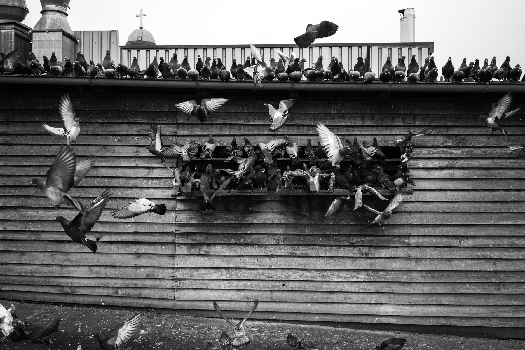 A pigeon den on top of a parking garage in downtown Frankfurt. The activists from the 'Stadttaubenprojekt' supply the den with food every couple of days, so the pigeons do not populate public places in their search for food. The pigeon's eggs are also replaced with dummies once or twice a week, so the pigeon populations do not increase. Even though the 'Stadttaubenprojekt's' methods in ethically dealing with pigeons are highly successful - most prominently in the city of Wiesbaden - authorities in Frankfurt hesitate or refuse to build more dens. They prefer controversial methods like spikes, nets, hawks or cages that can harm or kill pigeons and other birds and are much more expensive than dens. Some politicians think that the dens are ineffective since they are populated by too many pigeons. Reason does not often apply when it comes to pigeons in Frankfurt and in most parts of the world, since a with a higher number of dens the pigeons could spread on several of them.