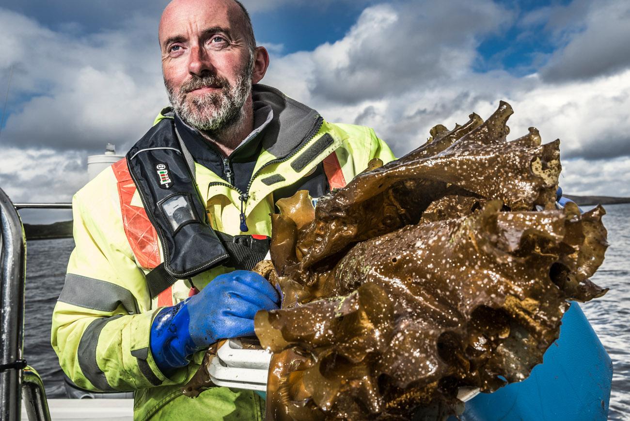 Lewis Mackenzie sugar kelp harvesting on the isle of lewis by Lewis Mackenzie for Harris Distillery gi