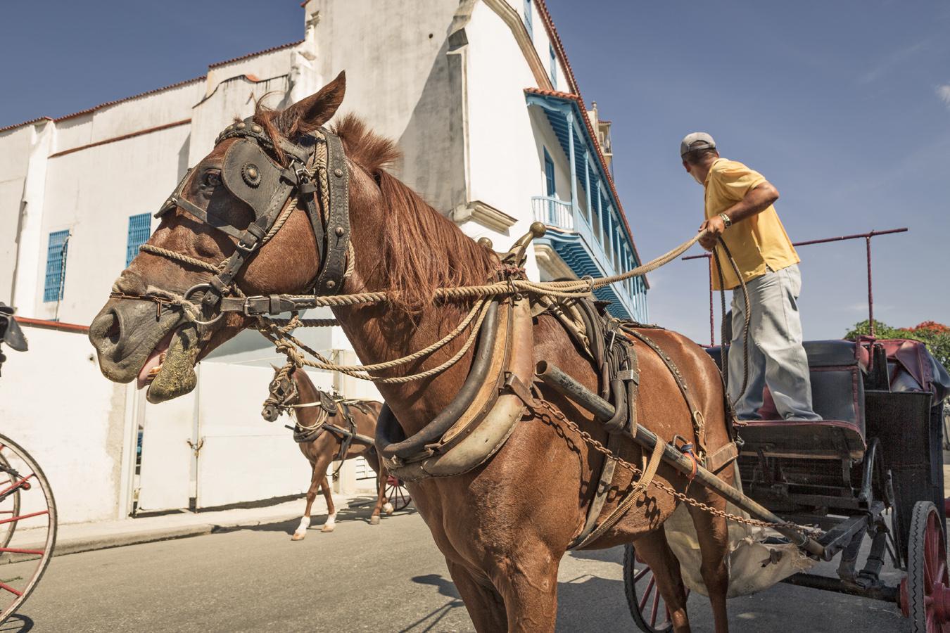 horse and cart in havana