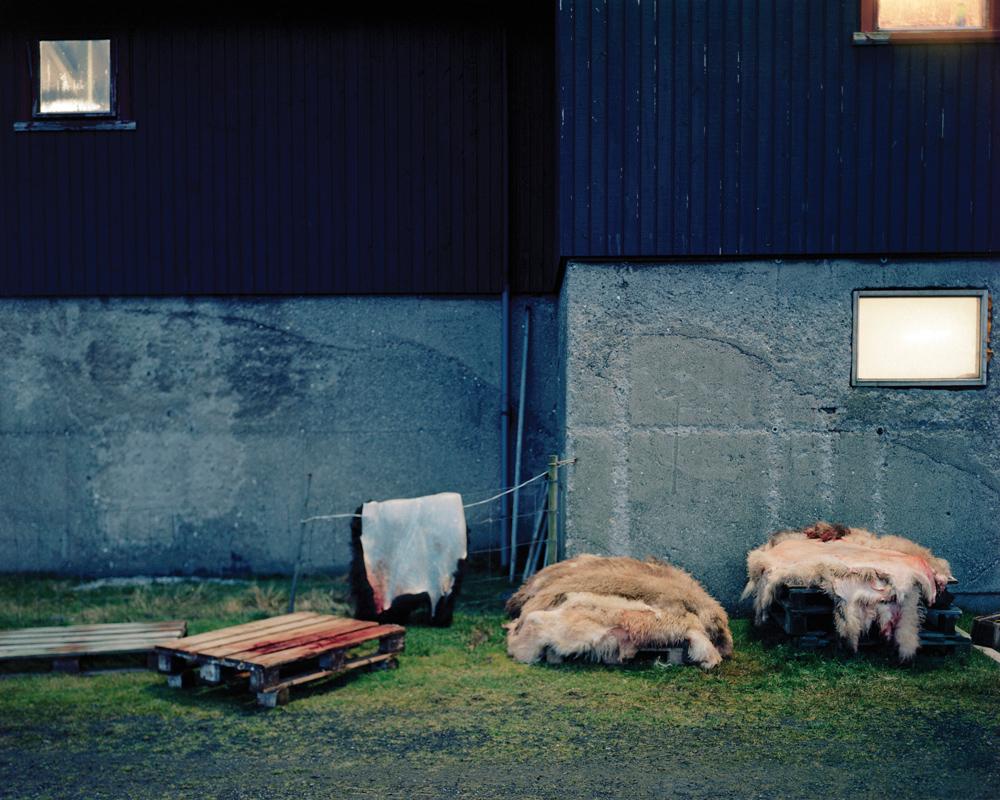 Sheepskins sit outside a slaughterhouse.