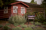 Holman-ranch-wedding0002