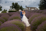 bride and groom in the lavender field at leal vineyards wedding